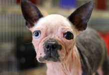 Alton Brown Rescue Dog Scabigail Atlanta