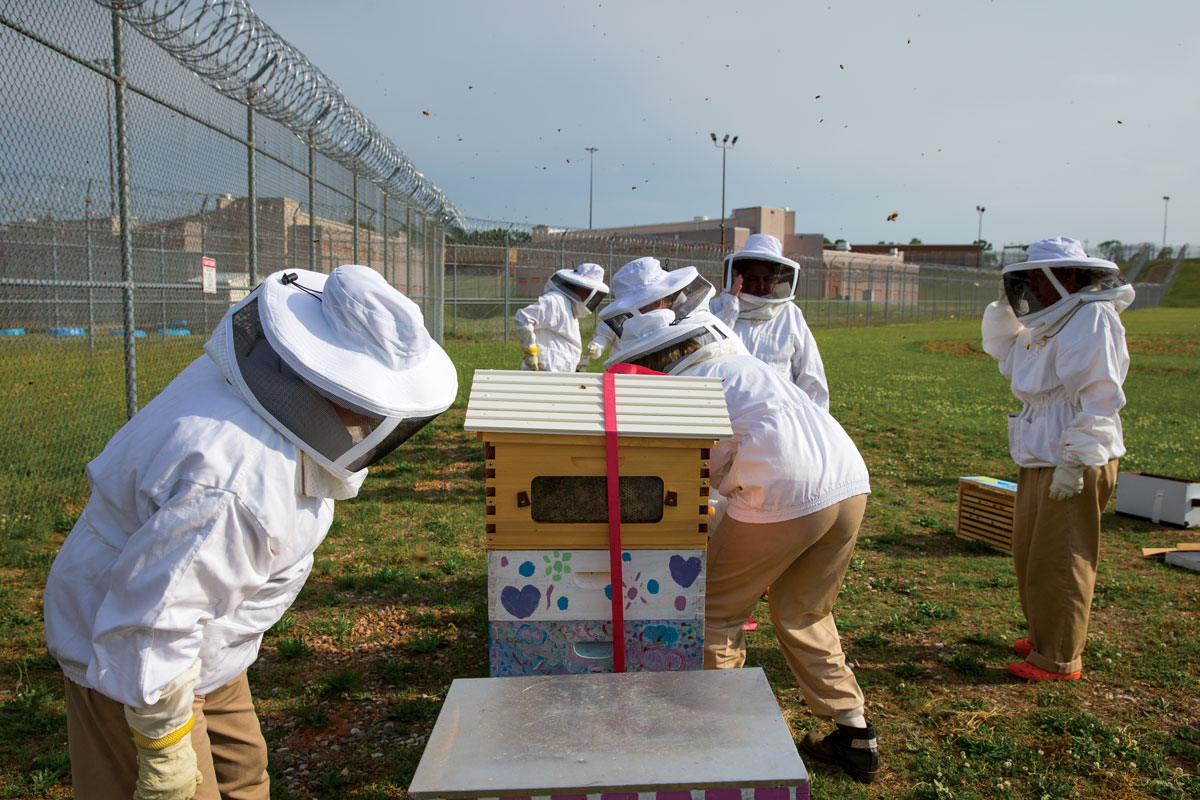 Beekeeping at Arrendale State Prison