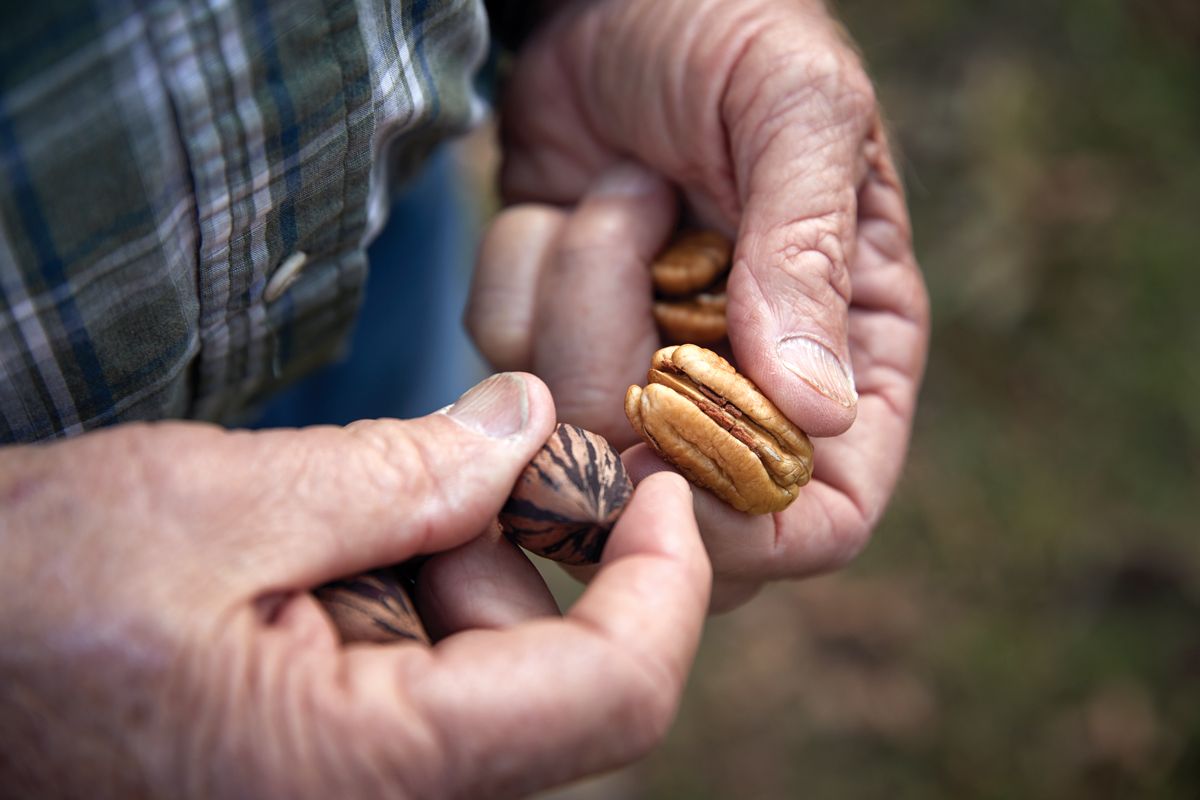 Georgia pecan farmers