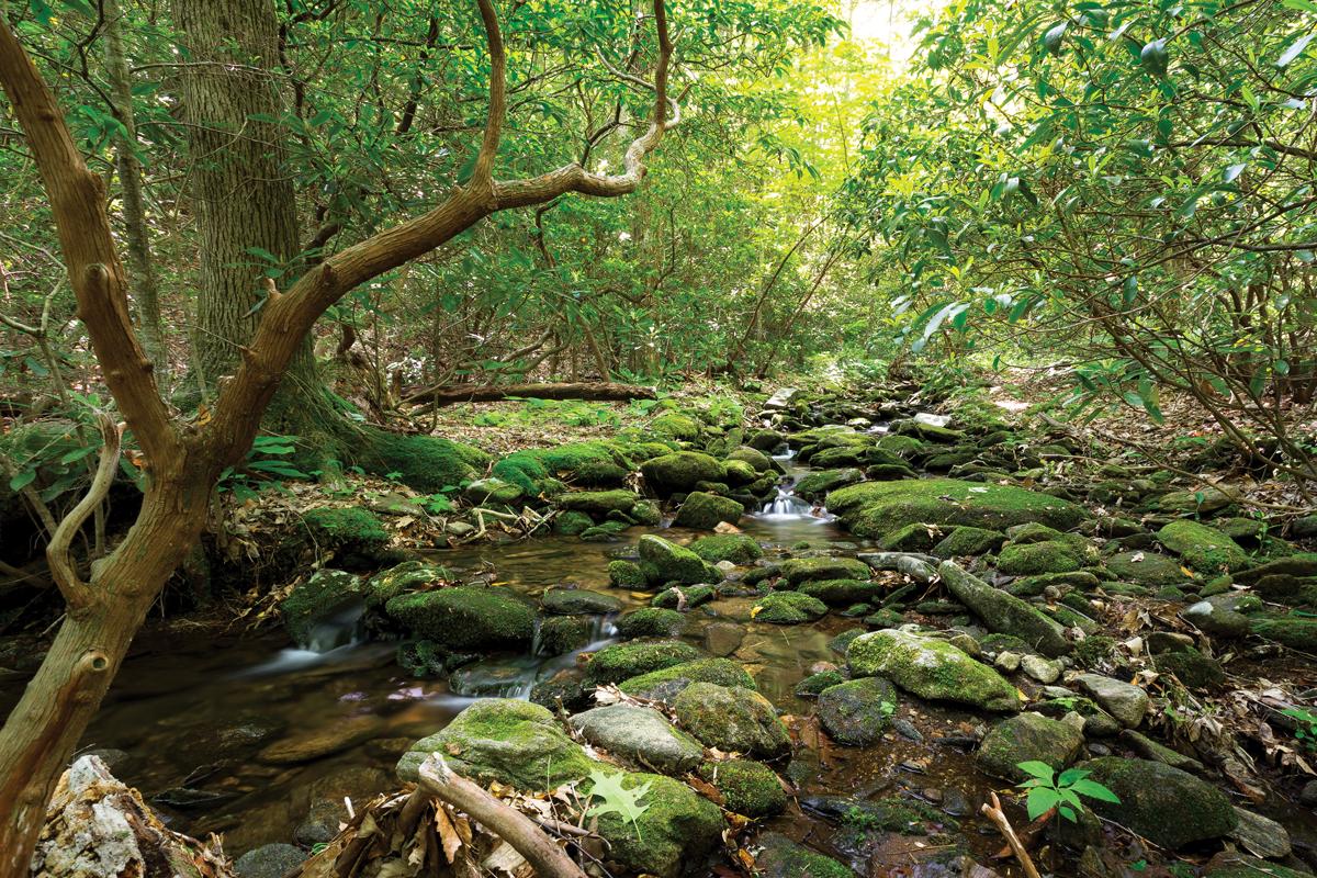 Appalachian Trail: Byron Reece Trail