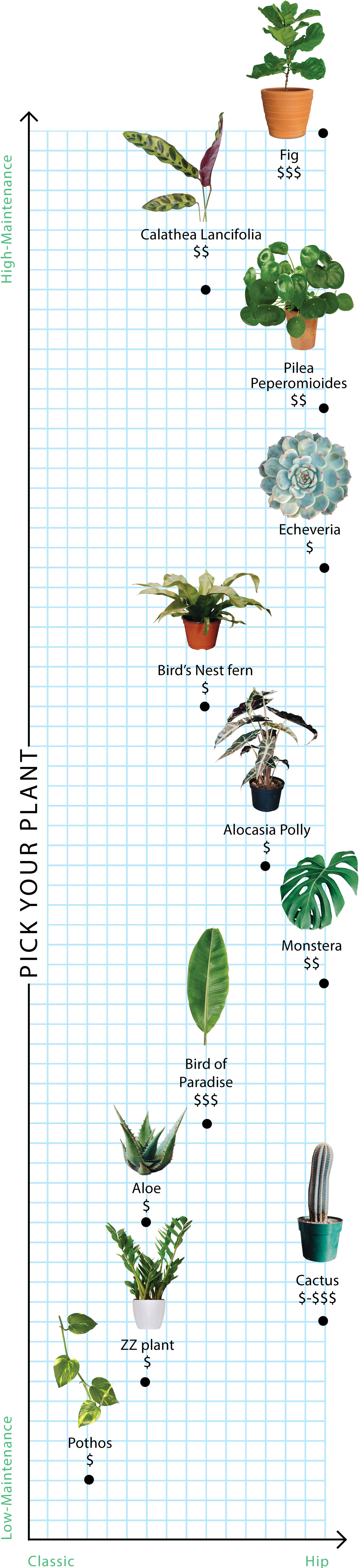 Houseplants graph