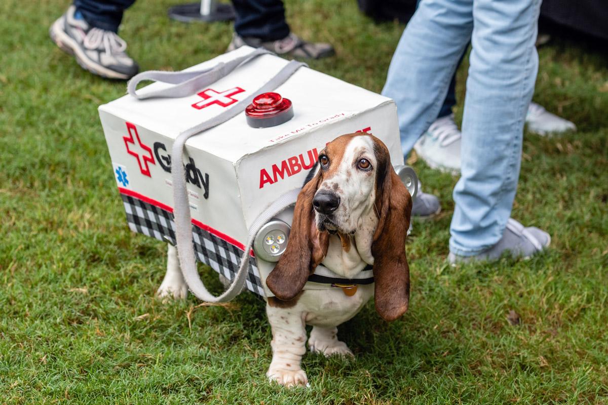 Doggy Con