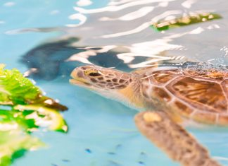 Georgia Sea Turtle Center on Jekyll Island