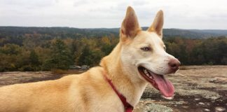 Best dog-friendly hikes where to walk your dog in Atlanta
