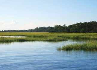 Sapelo Island's marshes