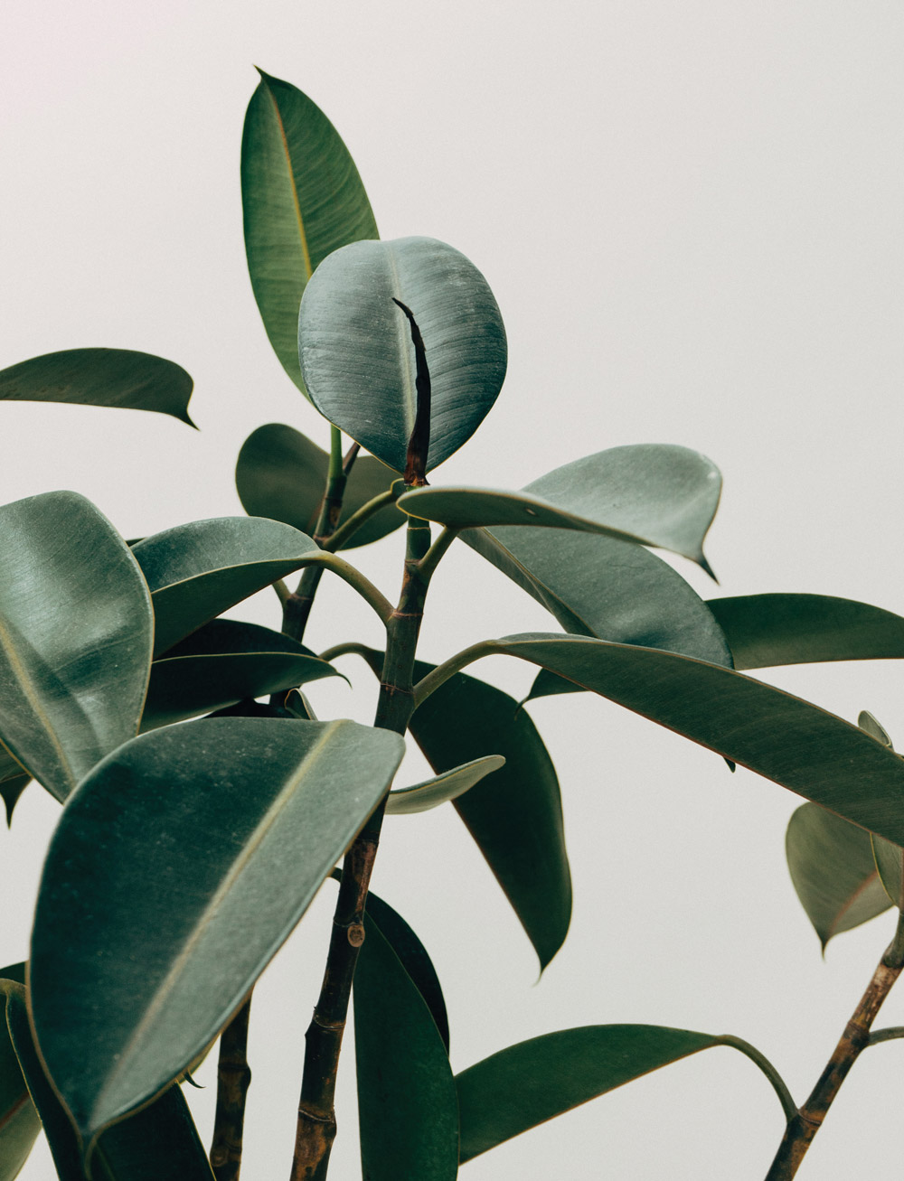 Victorian plant