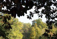 2020 Atlanta 500 Religion Nonprofits Advocacy Piedmont Park