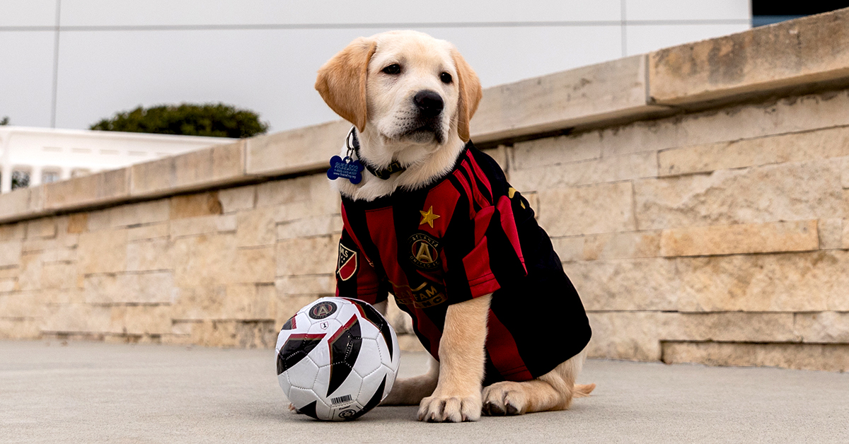 Spike Atlanta United service dog-in-training