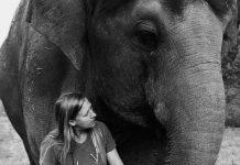 Carol Buckley elephants