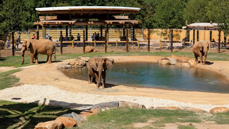 Meet all creatures great and small at these 5 zoos around the South