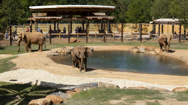 What's it like taking your kids to the zoo during a pandemic?