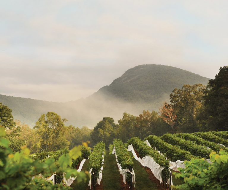 North Georgia's wine scene is surprisingly sophisticated. Here's where to visit.