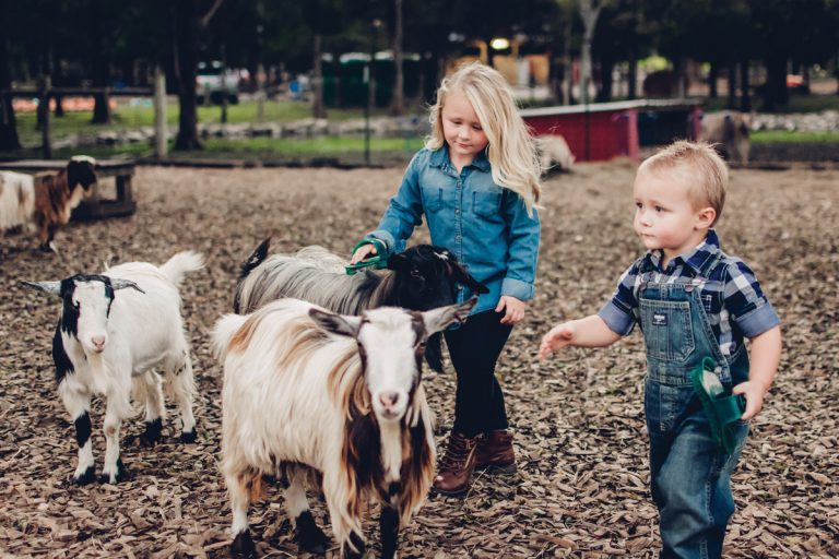 Five fun farms around the Southeast