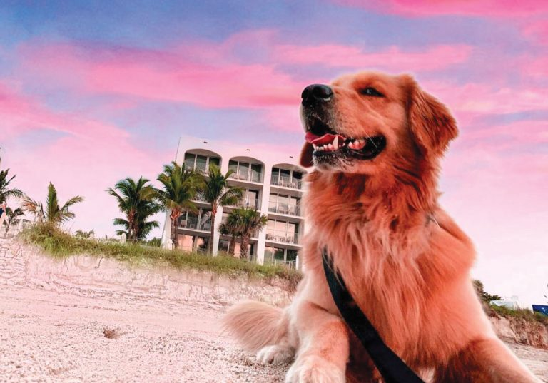 Five-Paw Stays: Pup-approved hotels that are off the chain