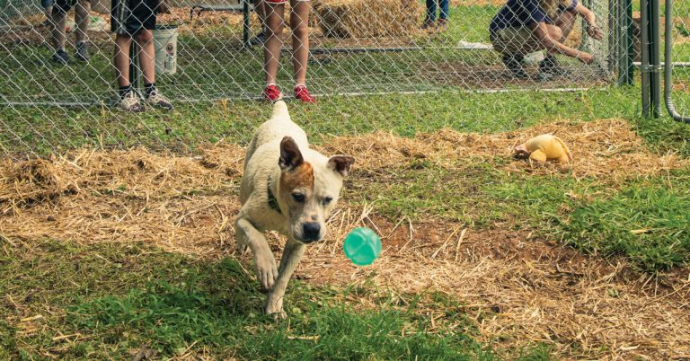 Georgia nonprofit Off the Chain builds enclosures to keep dogs from being tethered