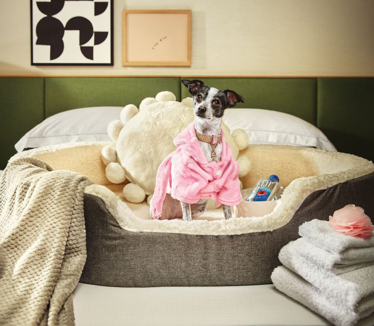 21 great pet-friendly hotels, patios, coffee shops, bars, and more in metro Atlanta