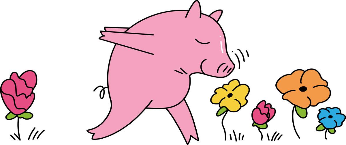 Sunshine the pig