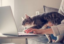 Why do cats love Zoom?