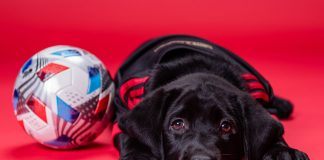 Atlanta United new service dog in training