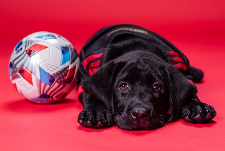 Meet King, Atlanta United's next service dog-in-training